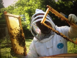 Beekeeper harvesting honey.